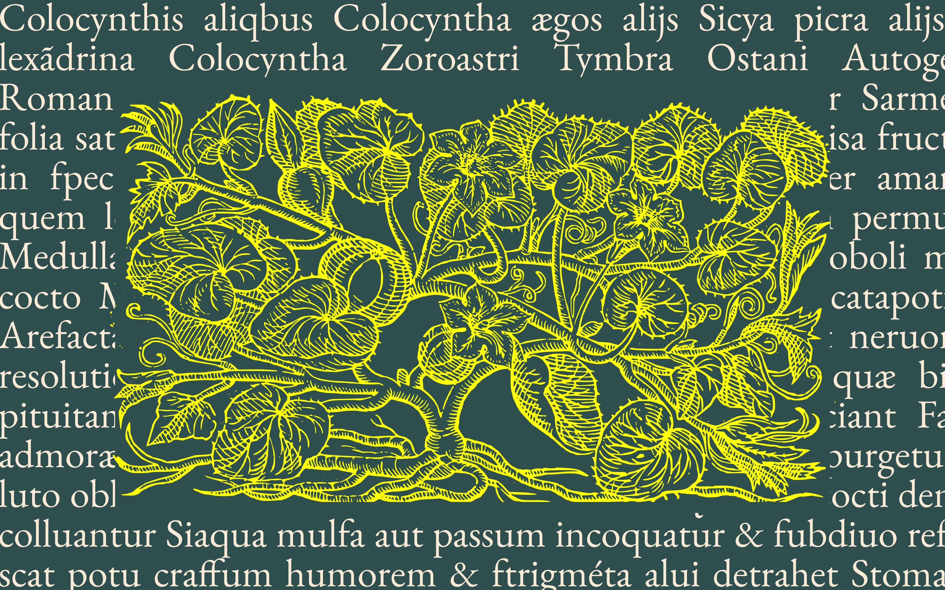 Dynia – historia naturalna owocu z Nowego Świata